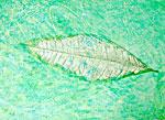 6/7 Leaf 01
